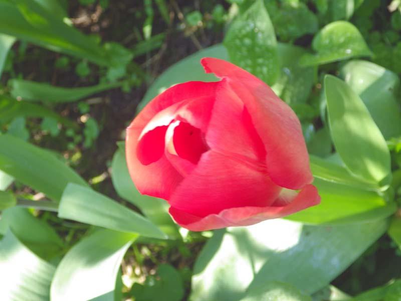 Roos-bloei-natuur-fotografie-KarinWaldner by gallery Communication in Art