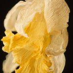 hjjager-fotografie-by-communication-in-art-narcis_opgedroogd5