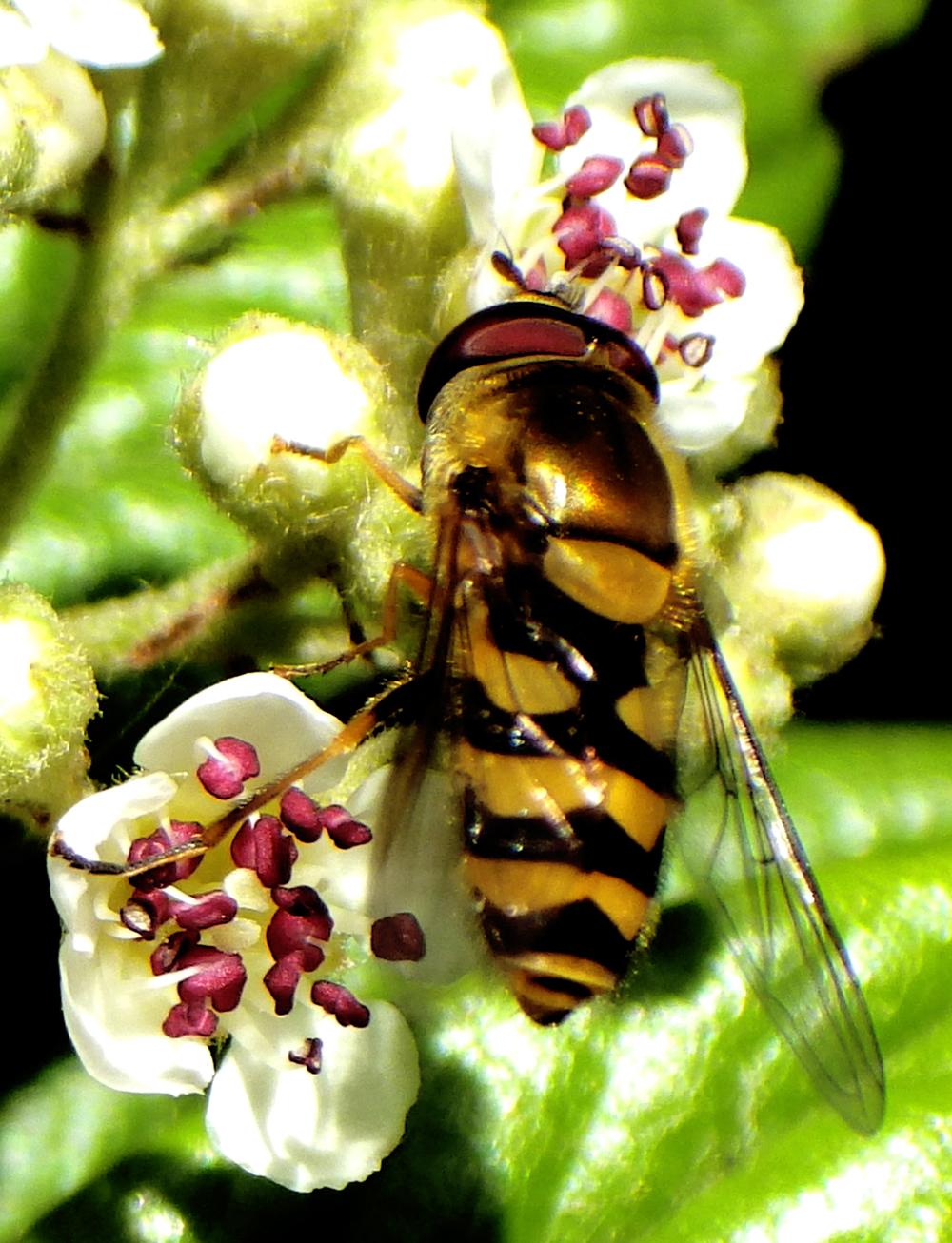Bijen-bee-natuur-nature-Karin Waldner-fotografie-by-Gallery Communication in Art