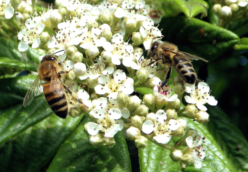 Bijen-Bees-nature Karin Waldner-fotografie-by-Gallery Communication in Art
