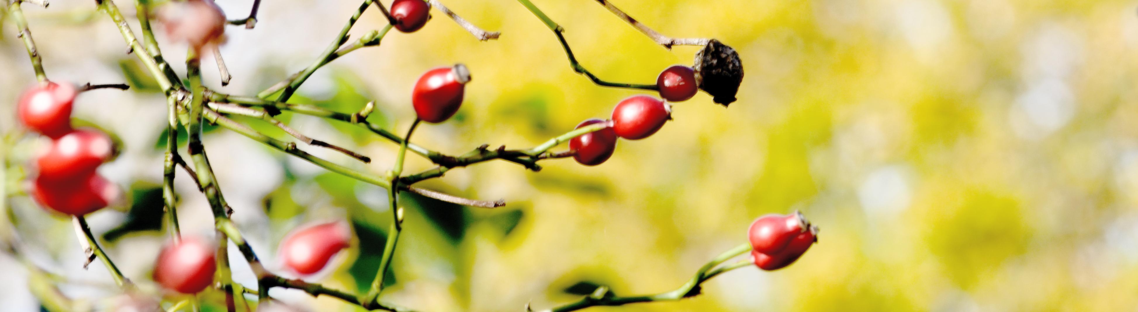 Karin Waldner Fotografie: Detail in red en ocre